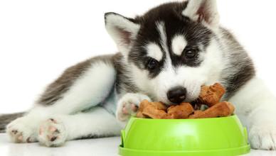 Jaka karma dla psa