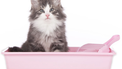 Jaki żwirek dla kota wybrać?