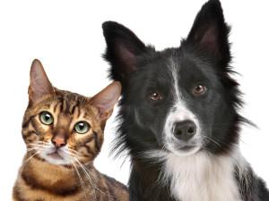 Kot czy pies? Czyli jak wybrać zwierzaka