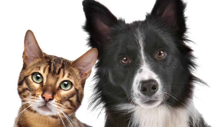 Kot Czy Pies Czyli Jak Wybrać Zwierzaka Blog Krakvetpl