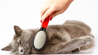 Jak pielęgnować sierść kota i psa?