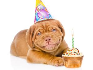 Jak liczyć wiek psa?