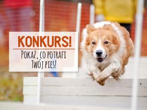 Pokaż, co potrafi Twój pies! – wyniki
