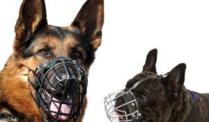 Jak wybrać kaganiec dla psa?