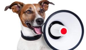 Jak rozumieć zachowanie psa? Poznaj sygnały wysyłane przez czworonoga