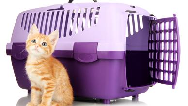 Jak wybrać transporter dla kota?
