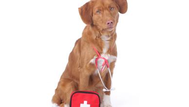Jaka karma dla psa chorego na nowotwór?