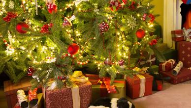 Kochany Mikołaju, nie chcę zostać żywym prezentem…
