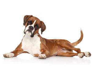 Jaka karma dla psa z chorymi stawami?