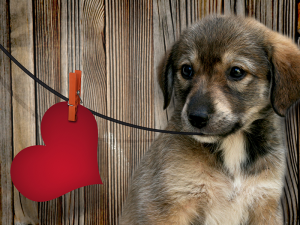 Jaka karma dla psa chorego na serce?