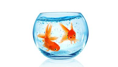 Filtry do akwarium – jak wybrać?