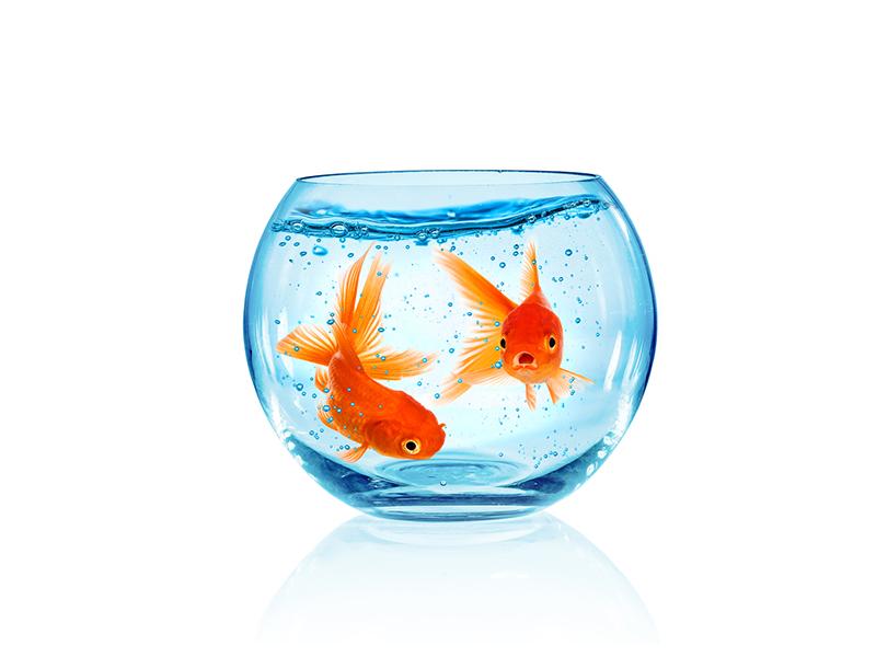 Jak wybrać filtr do akwarium?