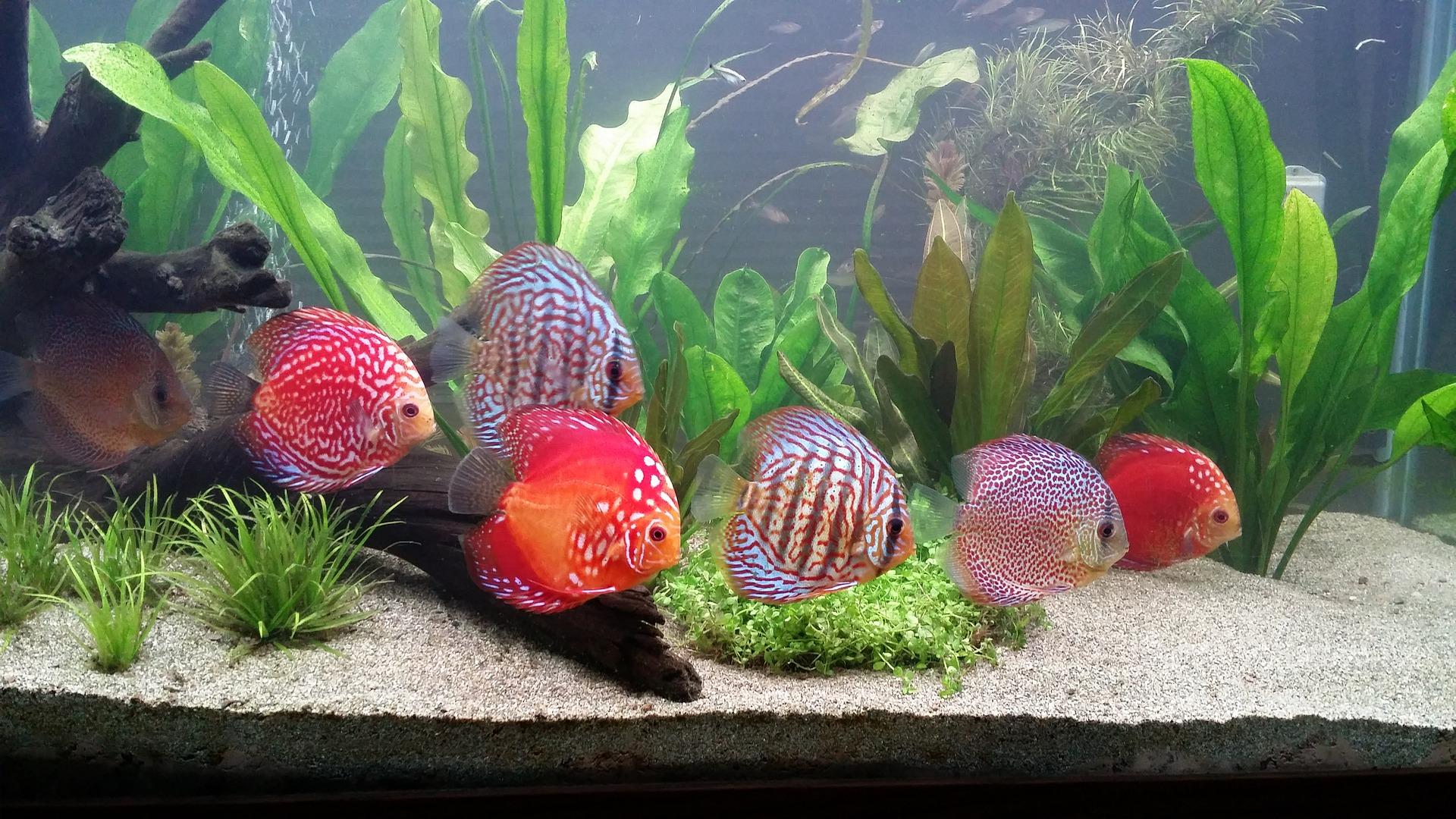 Duże akwarium