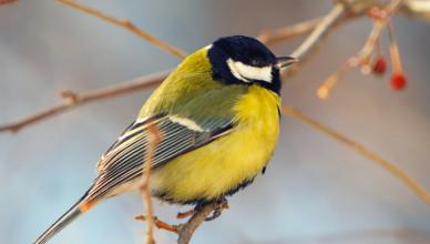 Jak wybrać piasek i podłoże dla ptaków?