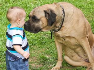 Czy psy czują zazdrość?