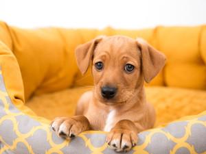 Jak skompletować wyprawkę dla psa?