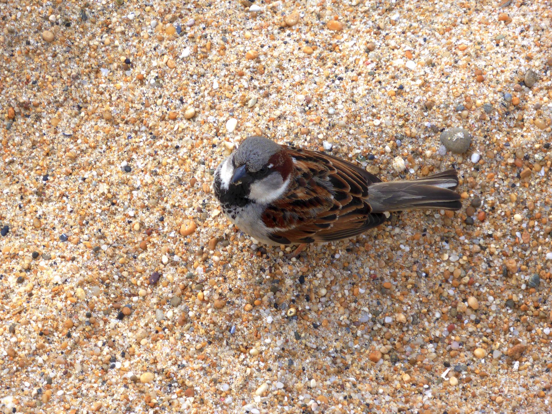 Ptak na piasku