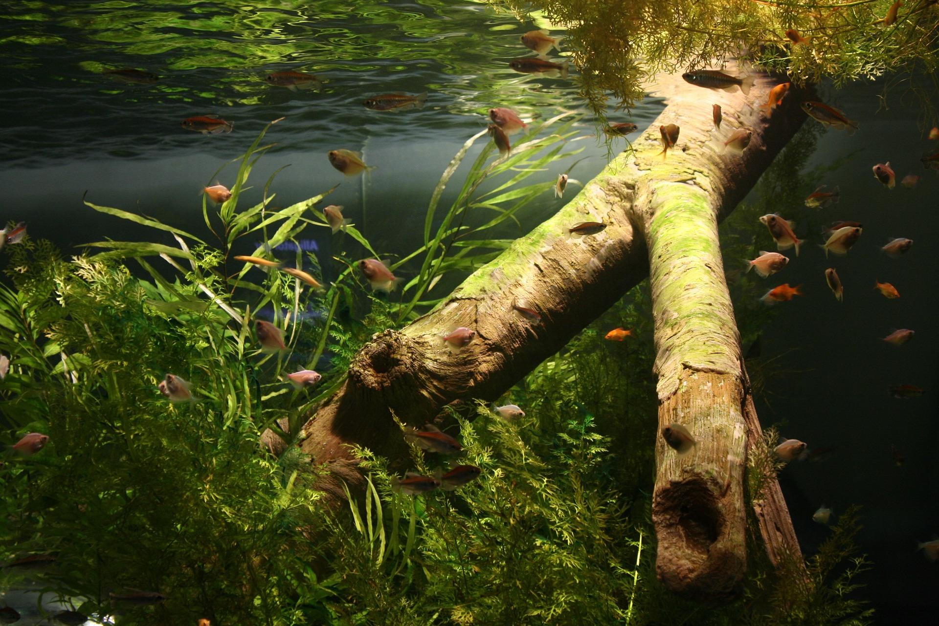 Zjawiskowe akwarium
