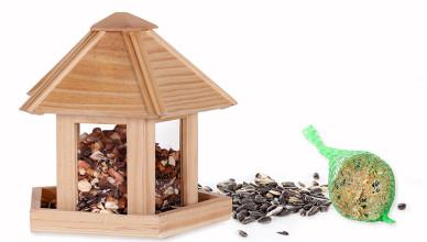 Jak wybrać pokarm dla ptaków?