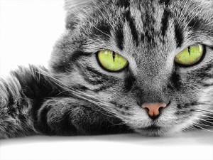 Kaganiec dla kota?