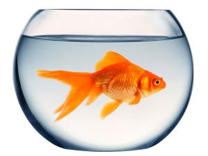 Jakie rybki do akwarium?