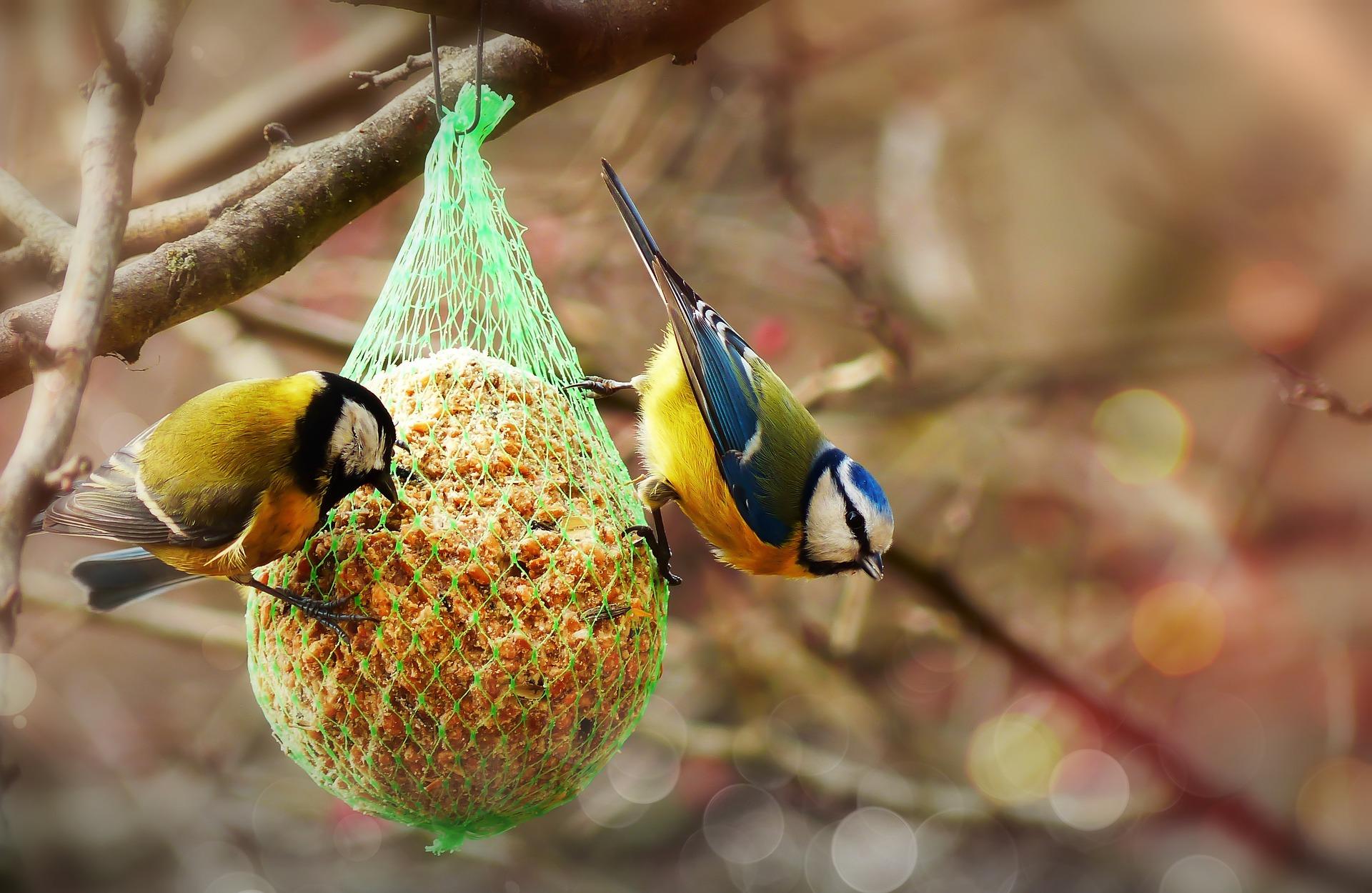 Pokarm w kuli dla ptaków