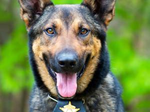 Pies w służbie człowieka