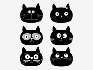 Jak zrozumieć kota?