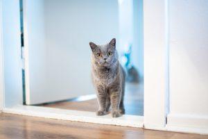 Zachowanie kota w praktyce