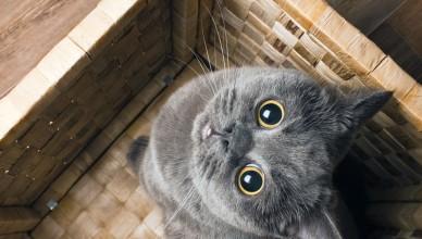 Dlaczego kot uwielbia wchodzić do pudełka?