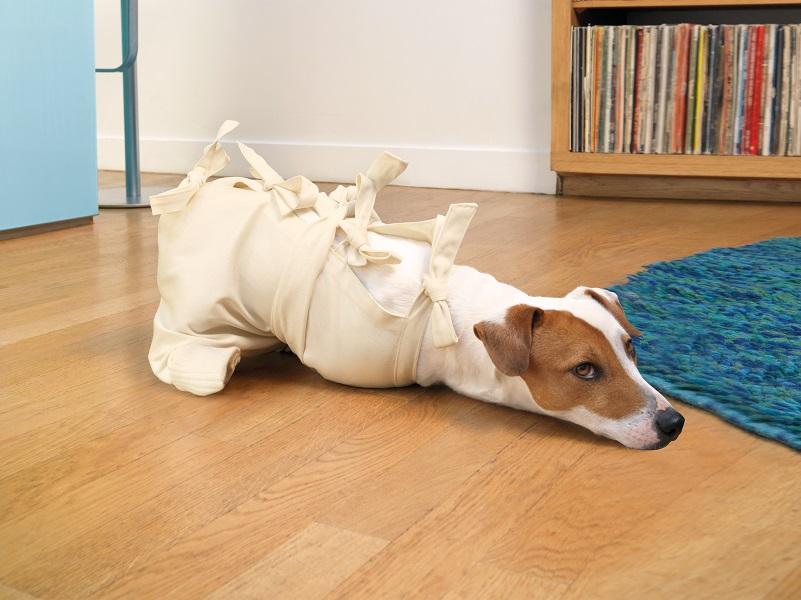 Pies w kaftanie