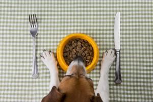 Czy pies powinien jeść z miski na podwyższeniu?