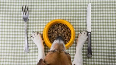 Pies je karmę z miski