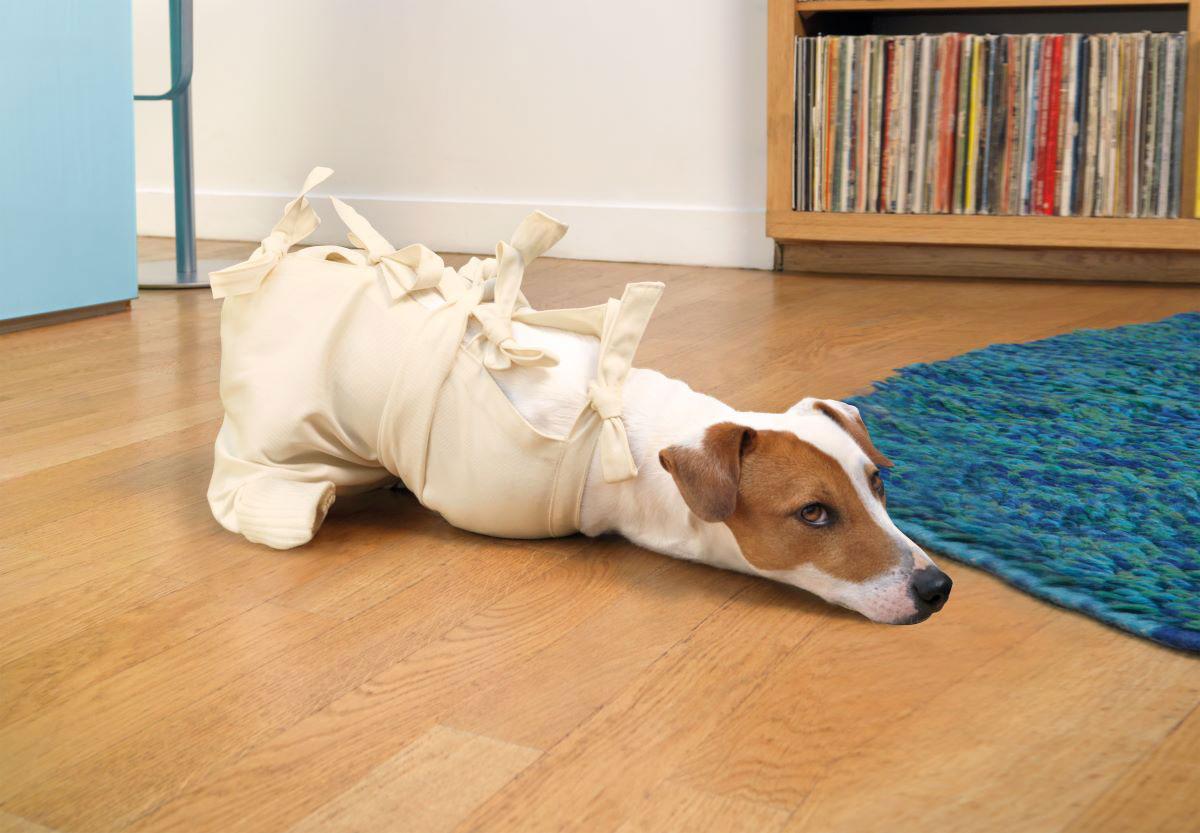 Alergia pokarmowa u psów – jej objawy i konsekwencje