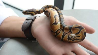 Wąż na ręce