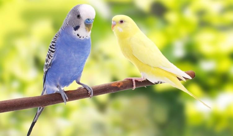 Papugi na gałęzi