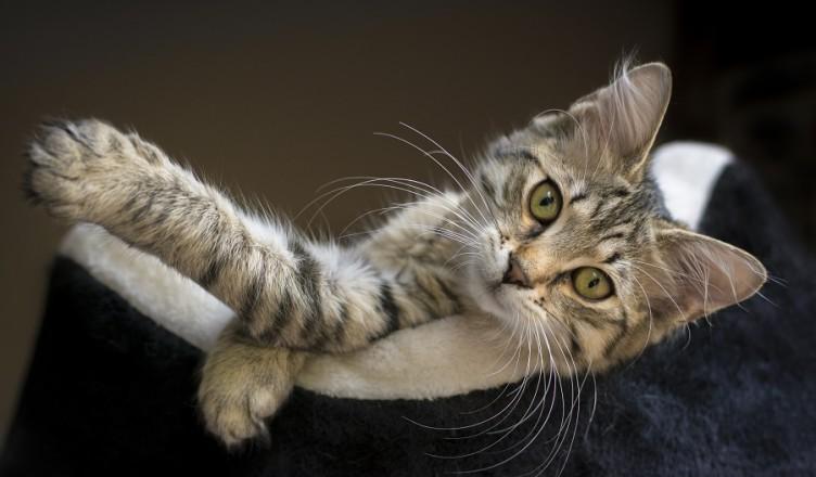 Kot w legowisku