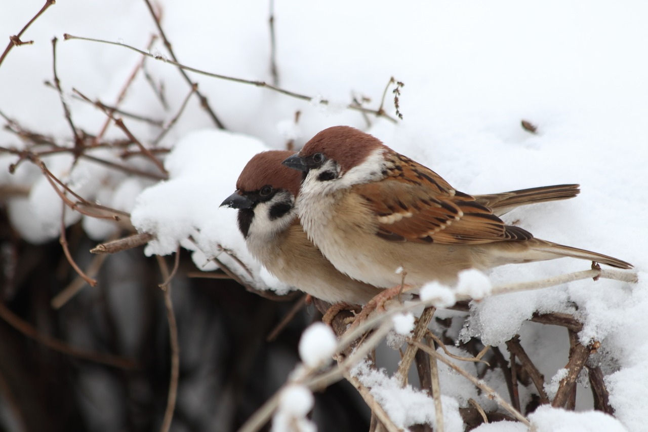 Ptaki zima