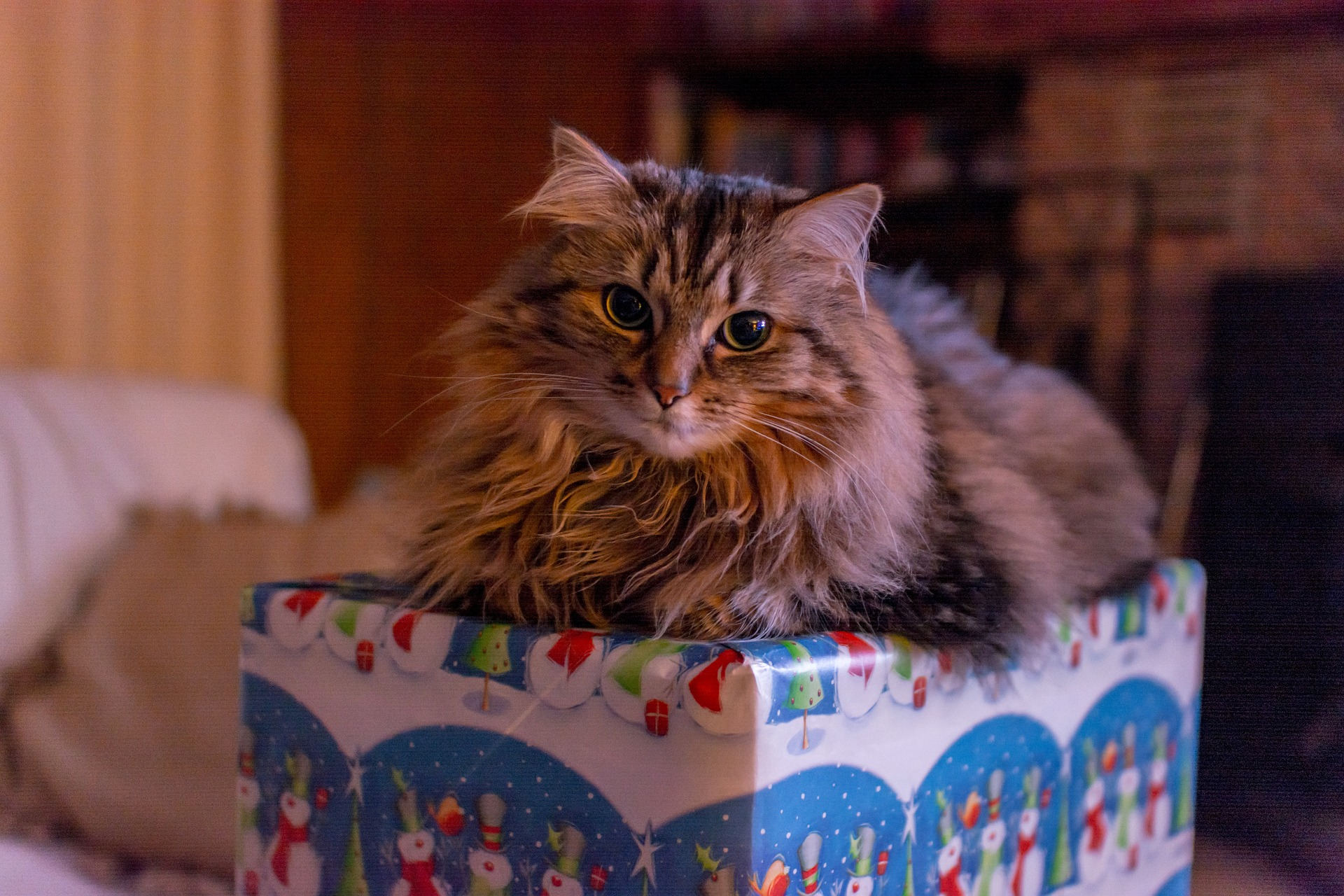 Kot jako prezent