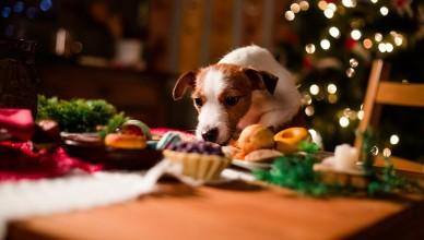 Wigilijne dania – nie dla psa!