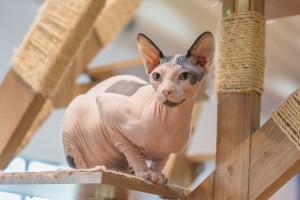 Kot dla alergika czy to możliwe?
