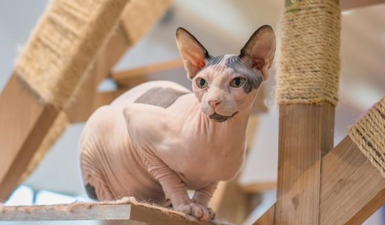 Kot Dla Alergika Czy To Możliwe Blog Krakvetpl