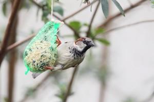 Dokarmianie ptaków zimą jak i czym?