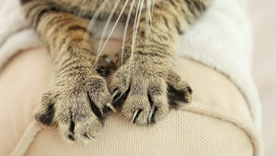 Kot niszczy meble
