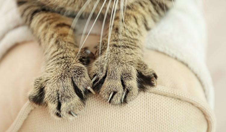 Gdy kot zaczyna niszczyć meble