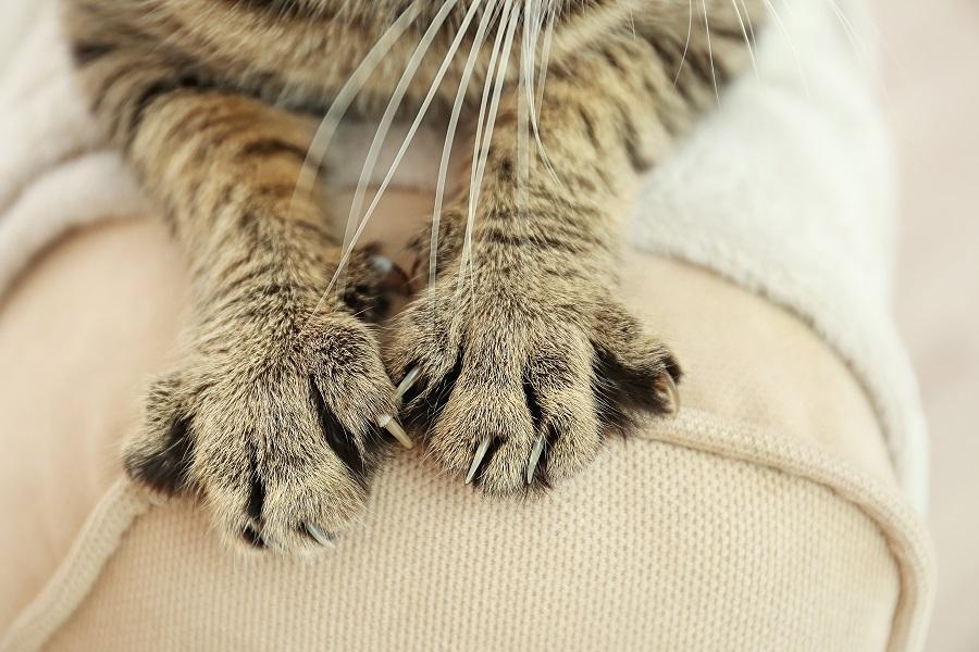 Gdy kot zaczyna niszczyć meble…