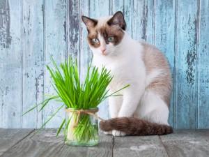 Dlaczego mój kot często wymiotuje?