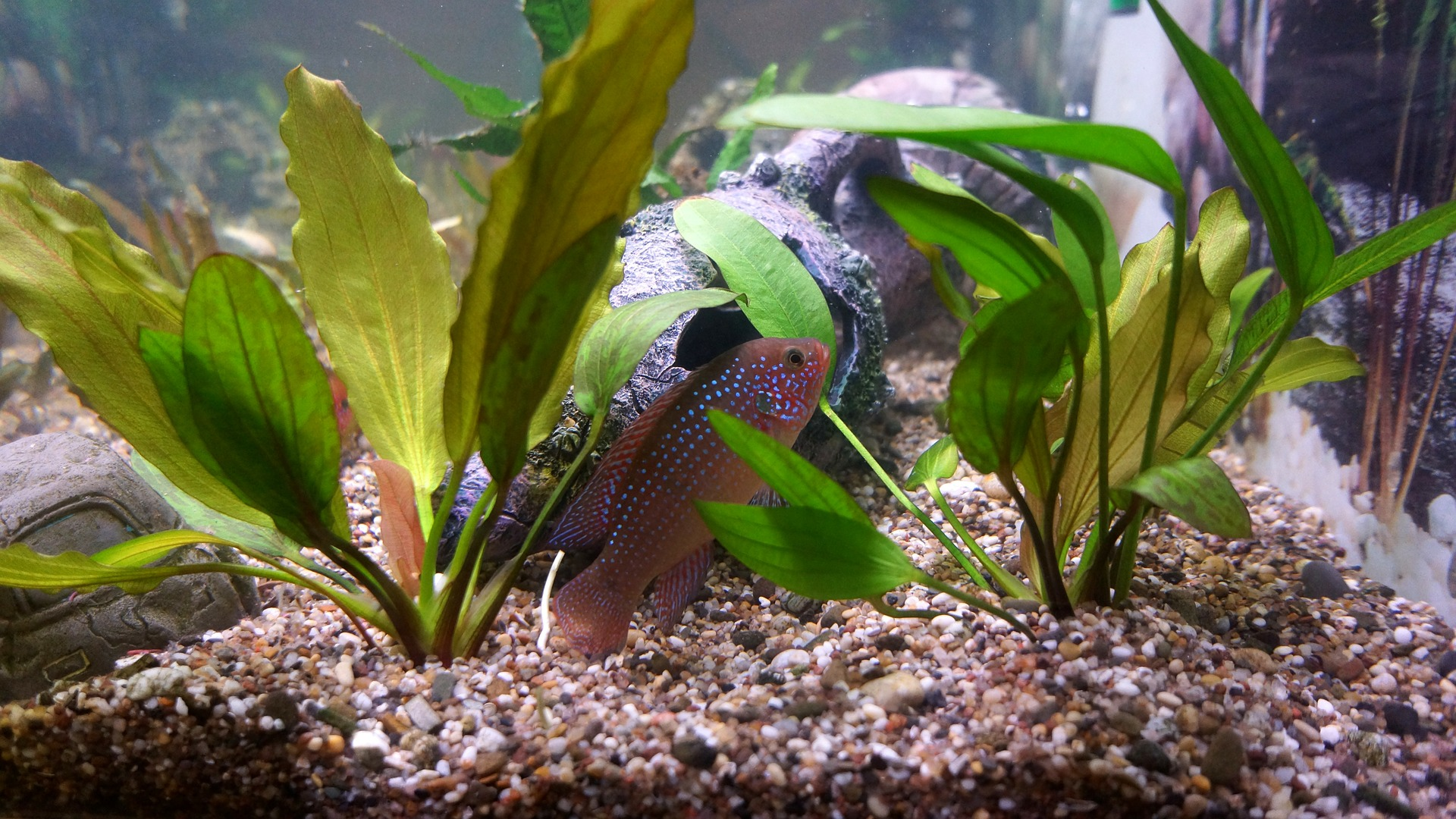Samotna ryba