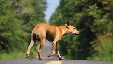 pies-na-drodze
