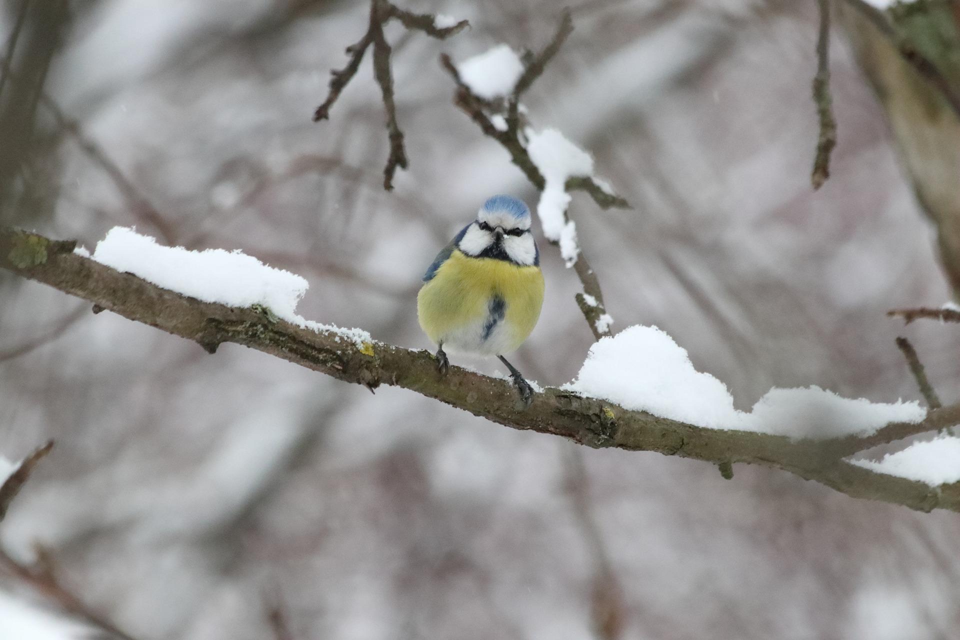 Ptak zimą